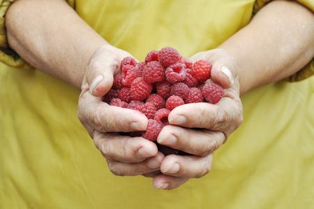 handful of the ripe raspberry in hand of the old women Reklamní fotografie - 75643271