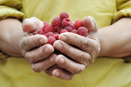 handful of the ripe raspberry in hand of the old women Stock Photo - 76820030