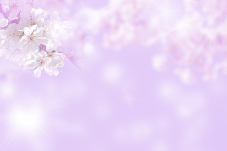 white flowers to cherries  it is toned  pink Stock Photo