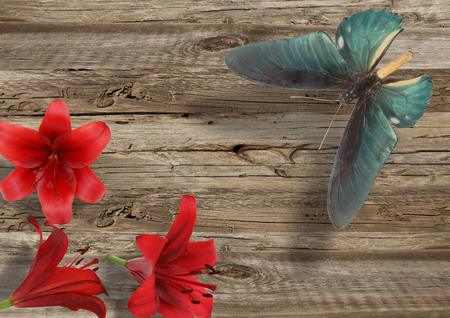 blue butterfly and red lily on grey wood background