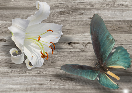 blue butterfly and white lily on grey wood background Stock Photo