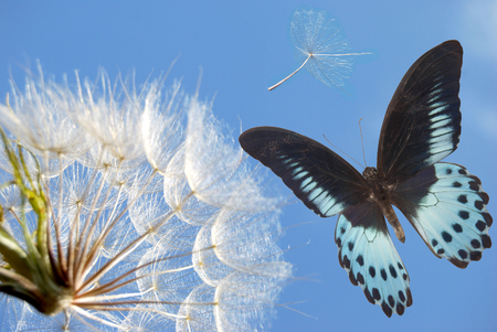 seed of the dandelion flies off and butterfly in blue sky Stock Photo - 107375248