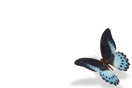 one blue butterfly on white background with shadow Stock Photo