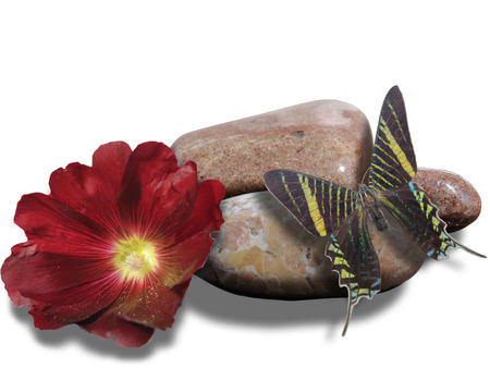 butterfly sits on a stone and red flower Imagens