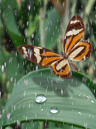 broun butterly on green grass with drop water