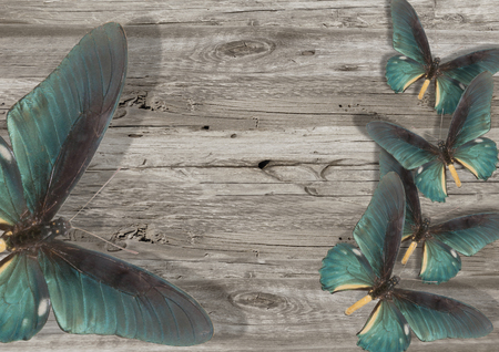 three blue butterfly on grey wood background Stock Photo - 108609004