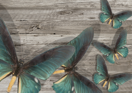 three blue butterfly on grey wood background Stock Photo