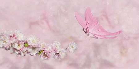 pink flower and pink butterfly on pink background