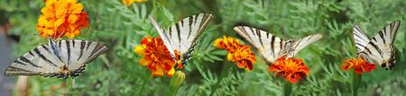 four butterfly and flowers in summer garden Stock Photo - 139827485