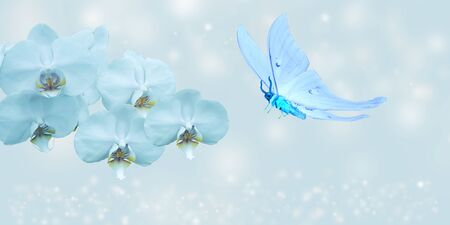 blue butterfly and blue orchid on blue background