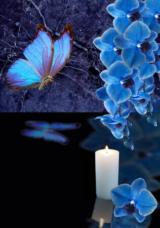 blue orchid with candle on black background Stock Photo