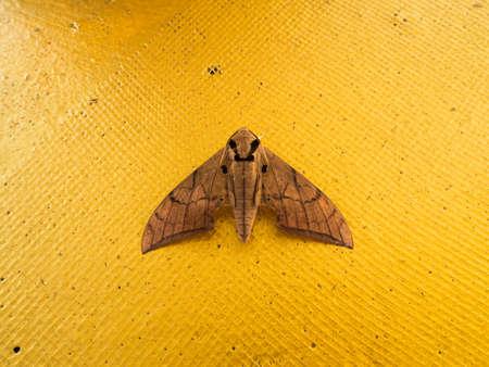 moth: Big moth