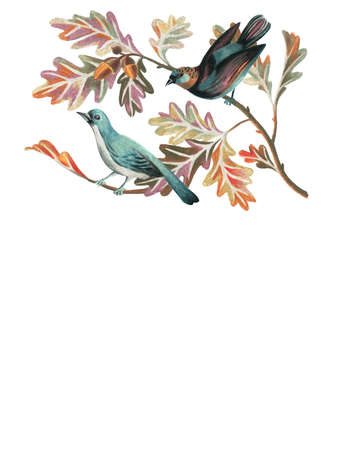 Artwork with birds, oak branches, leaves and acorns in vintage style. Nature illustration drawn by color pencils. Great for wedding decoration, gift boxes, wrapper, placing text, logos, phrases, card
