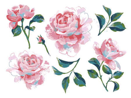 Bright floral set isolated on white. Opulent pink roses collection drawn by acryl. Decorative flower elements for prints, card, poster, banner, icons.