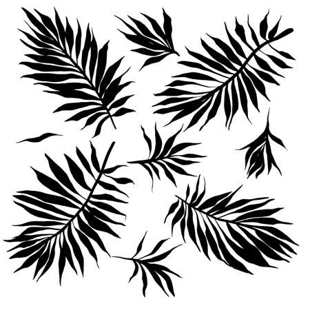 Vector set with silhouettes of fantasy exotic leaves. Hand drawn black plant leaf bunch isolated on white. Trop [ical plants. Flat graphic collection of sprigs for summer design. Ilustración de vector
