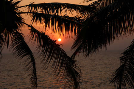 varkala: A silhouette of palm leaves on the ocean background on sunset Stock Photo