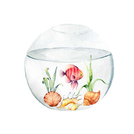 Aquarium, a realistic aquarium with fish and algae. Watercolor illustration of aquarium with fish isolated on white. Zdjęcie Seryjne - 128721724