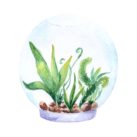 Aquarium, a realistic aquarium with fish and algae. Watercolor illustration of aquarium with fish isolated on white. Zdjęcie Seryjne - 128723051