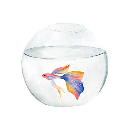 Aquarium, a realistic aquarium with fish and algae. Watercolor illustration of aquarium with fish isolated on white. Zdjęcie Seryjne - 128723057