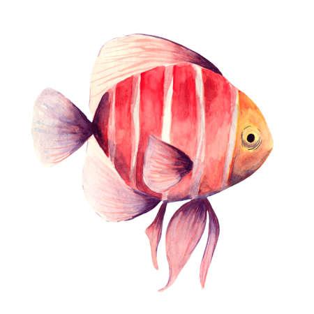 Aquarium, a realistic aquarium with fish and algae. Watercolor illustration of aquarium with fish isolated on white. Zdjęcie Seryjne - 128723067