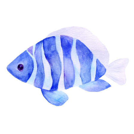 Aquarium, a realistic aquarium with fish and algae. Watercolor illustration of aquarium with fish isolated on white. Zdjęcie Seryjne - 128723065