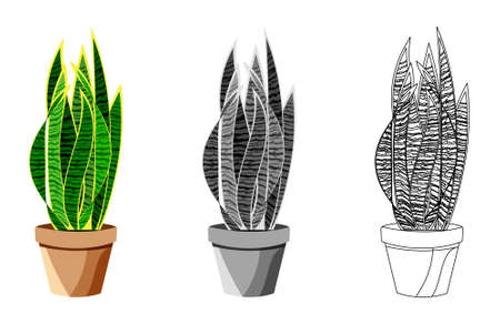 realistic detailed house plant for interior design and decoration.Tropical plant for interior decor of home or office.