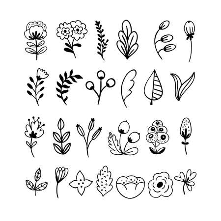 Hand drawn monochrome flowers, leaves and branches. Çizim