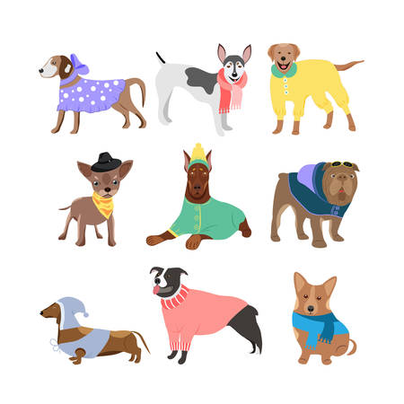 Set of dogs different breeds. Rottweiler, husky, chow-chow, doberman, Toy terrier. They can be used in the brochure, banners, ads.Vector illustration.  イラスト・ベクター素材