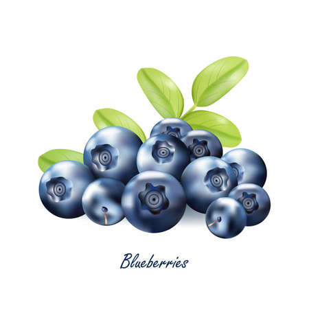 Set of realistic ripe berryes on a white background.Vector illustration.