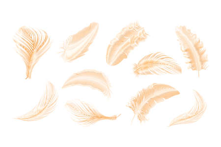 Vector gold,pink ,silver feathers collection set on a white background. 版權商用圖片 - 155451084