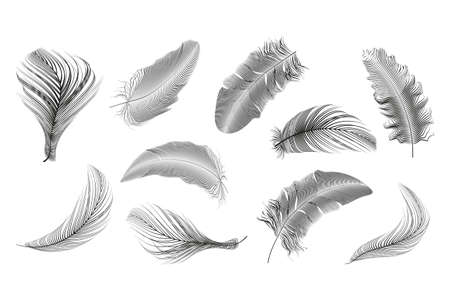 Set of different falling fluffy twirled feathers on a white background. 版權商用圖片 - 155443899