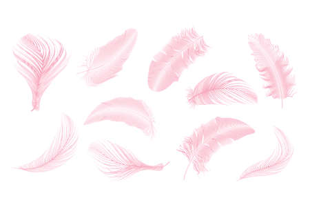 Set of different falling fluffy twirled feathers on a white background. 版權商用圖片 - 155444567