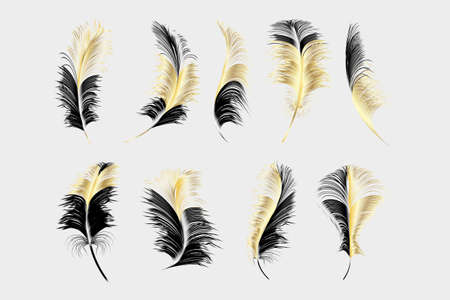 Vector feathers collection. 版權商用圖片
