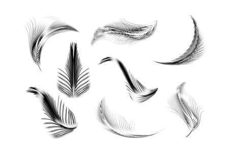 Vector feathers collection. 版權商用圖片 - 155538303