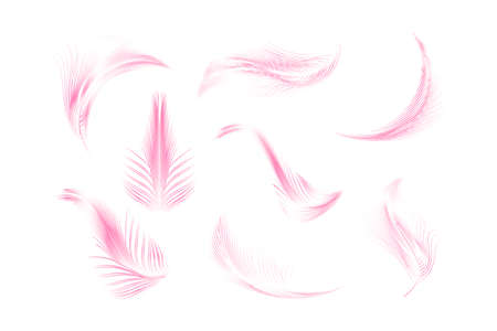 Vector feathers collection. 向量圖像