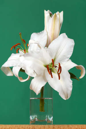 Large white lily in a glass on a green background Stock Photo - 11878214