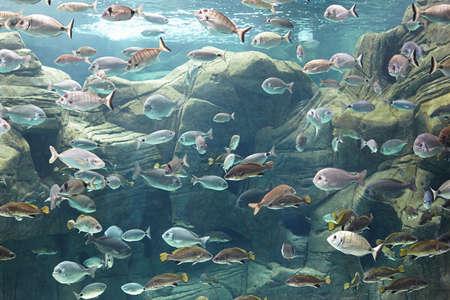 reconstituted: Greece Gournes. Underwater world of the Mediterranean Sea in the aquarium of Crete