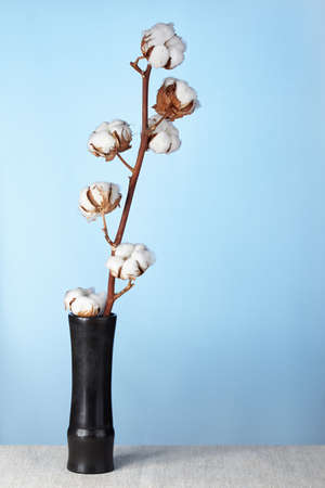 floristry: The dry branch of a cotton costs in an old shabby vase