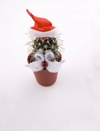 weihnachtsmann lustig: Cactus Werk als einen Weihnachtsmann, lustige Abbildung