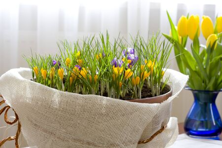 Home decoration, spring flowers photo