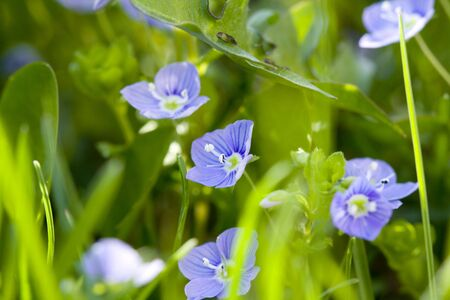 Wild flowers blossom in the meadow Stock Photo