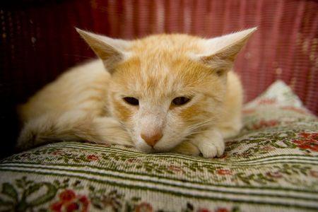 Sleeping cat on willow armchair photo