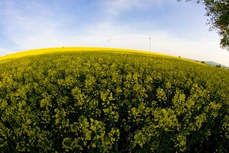 Windmill over rapeweed field in bloom fish eye look Stock Photo - 7007495