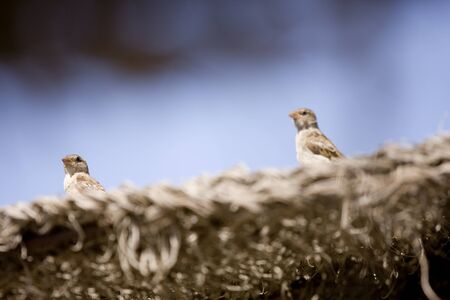 Pair of birds sitting on beach umbrella