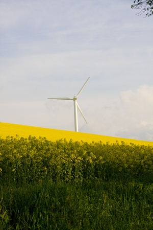 meadowland: Windmill over rapeweed field in bloom Stock Photo