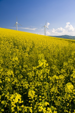 Windmill over rapeweed field in bloom Stock Photo