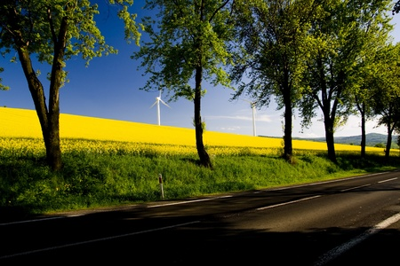 Windmill over rapeweed field in bloom Stock Photo - 10878740