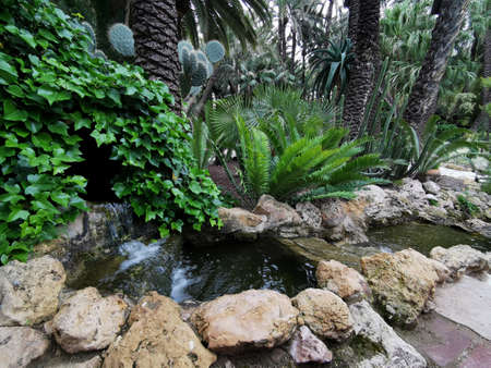 Tropical garden in Elche, Spain. Huerta del cura landscape design of parks, squares, tropical background