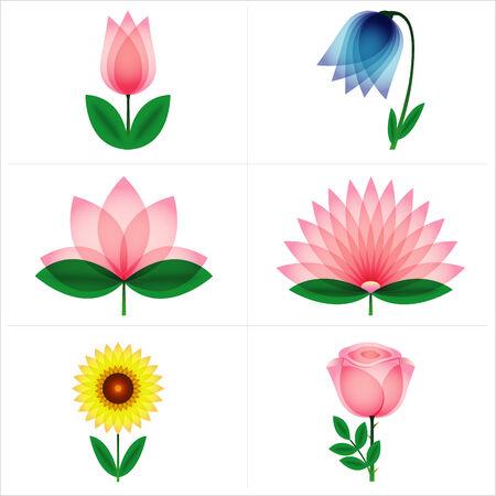 aster: Beautiful rose, tulip, bell flower, aster, lotus, sunflower. Vector