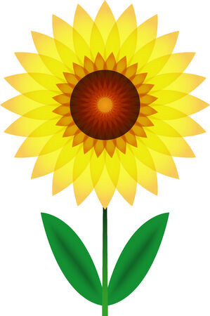 Beautiful sunflower for design photo